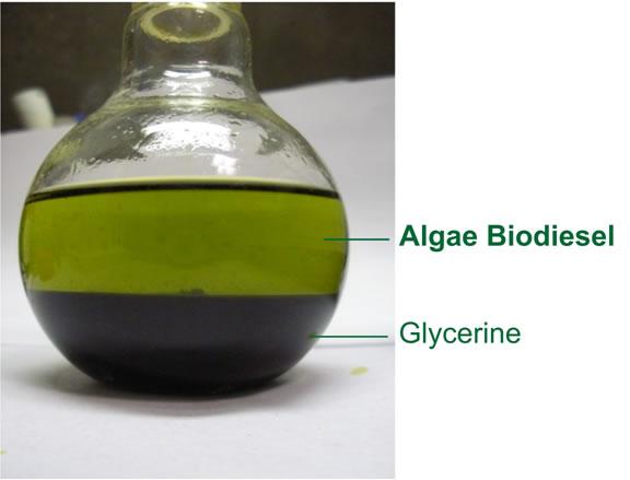 Biodiesel da alghe: non è fantasia!