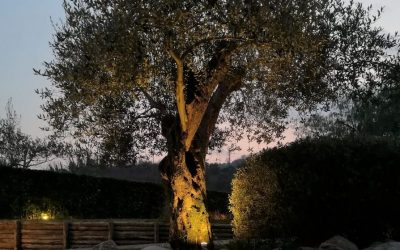 Edizioni goree uomo tra etica diritto ed ambiente for Faretti led costo